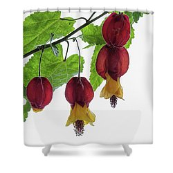 Chinese Lantern 4 Shower Curtain