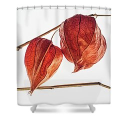 Chinese Paper Lantern Pods Shower Curtain