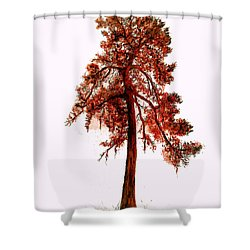 Shower Curtain featuring the drawing Chinese Pine Tree Drawing by Maja Sokolowska