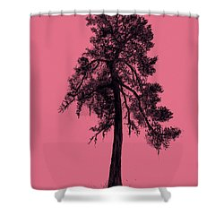 Shower Curtain featuring the drawing Chinese Pine Tree by Maja Sokolowska