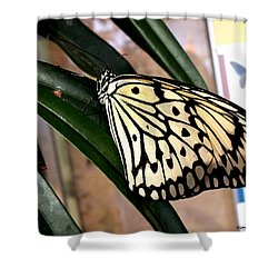 Chinese Yellow Swallowtail Shower Curtain