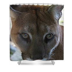Shower Curtain featuring the photograph Chinook by Laddie Halupa