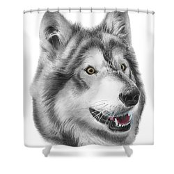 Shower Curtain featuring the drawing Chinook by Peter Piatt