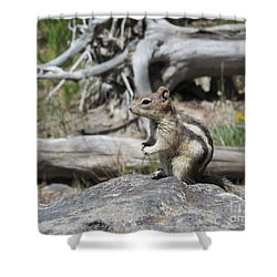 Chipmunk At Yellowstone Shower Curtain by Ausra Huntington nee Paulauskaite