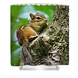 Chipmunk On A Limb Shower Curtain by Christina Rollo