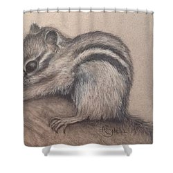 Shower Curtain featuring the drawing Chipmunk, Tn Wildlife Series by Annamarie Sidella-Felts
