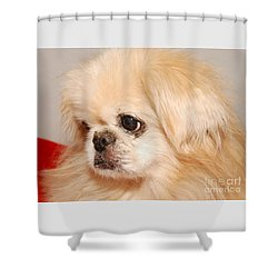 Chipper Shower Curtain by Debbie Stahre