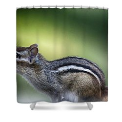 Chippy 1 Shower Curtain