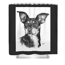 Chiweenie Shower Curtain by Barbara Keith