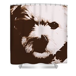 Chocolate Charlie Shower Curtain by Ed Smith