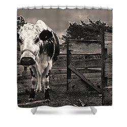Shower Curtain featuring the photograph Chocolate Chip At The Stables by T Brian Jones