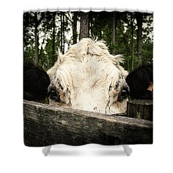 Shower Curtain featuring the photograph Chocolate Chip Saying Hello by T Brian Jones