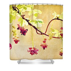 Chocolate Drops Shower Curtain
