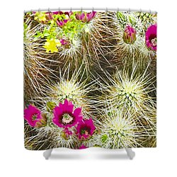Cholla Cactus Blooms Shower Curtain