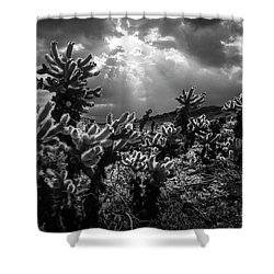 Shower Curtain featuring the photograph Cholla Cactus Garden Bathed In Sunlight In Black And White by Randall Nyhof