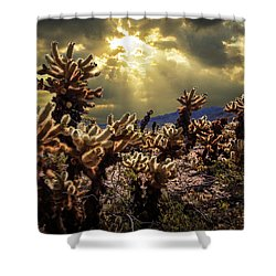 Shower Curtain featuring the photograph Cholla Cactus Garden Bathed In Sunlight In Joshua Tree National Park by Randall Nyhof