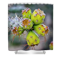 Shower Curtain featuring the photograph Cholla Fruit S48 by Mark Myhaver