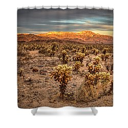 Cholla Garden Shower Curtain by Peter Tellone