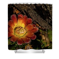 Cholla Shower Curtain