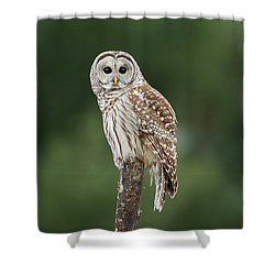 Chouette Perchee. Shower Curtain by Denis Dumoulin