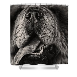Chow Chow  Shower Curtain by Stelios Kleanthous