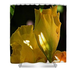 Yellow Iris Shower Curtain by Stuart Turnbull