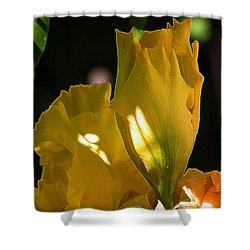 Shower Curtain featuring the digital art Yellow Iris by Stuart Turnbull