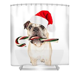 Christmas Bulldog Eating Candy Cane Shower Curtain