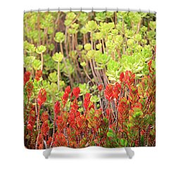 Shower Curtain featuring the photograph Christmas Cactii by David Chandler