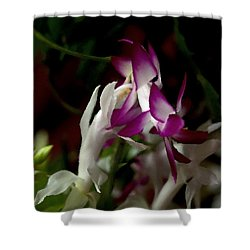 Shower Curtain featuring the photograph Christmas Cactus by B Wayne Mullins