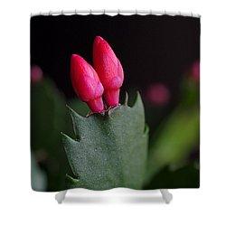 Christmas Cactus Double Joy Shower Curtain by Rona Black