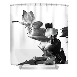 Christmas Cactus Shower Curtain by Ed Cilley