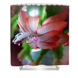 Shower Curtain featuring the photograph Christmas Cactus by EricaMaxine  Price