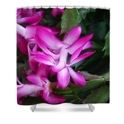 Shower Curtain featuring the photograph Christmas Cactus by Joan Bertucci