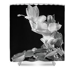 Christmas Cactus On Black Shower Curtain by Ed Cilley