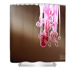 Christmas Cactus Stamen Shower Curtain