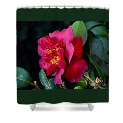 Christmas Camellia Shower Curtain