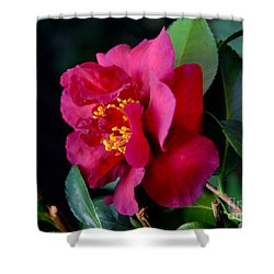 Shower Curtain featuring the photograph Christmas Camellia by Marie Hicks