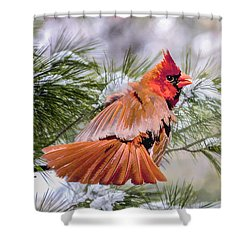 Shower Curtain featuring the photograph Christmas Cardinal by Brian Tarr