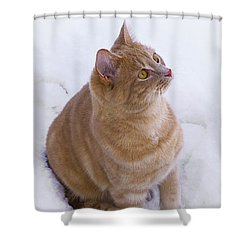 Christmas Cat Shower Curtain