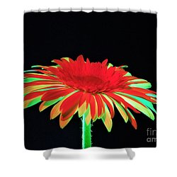 Christmas Daisy Shower Curtain