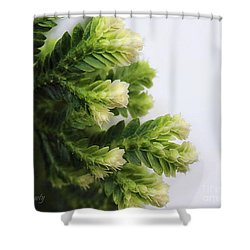 Christmas Fern Shower Curtain