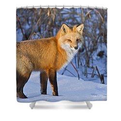 Christmas Fox Shower Curtain by Mircea Costina Photography