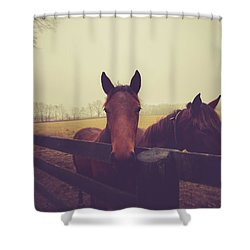 Shower Curtain featuring the photograph Christmas Horses by Shane Holsclaw