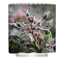 Shower Curtain featuring the photograph Christmas Miniature Rosebuds by Katie Wing Vigil