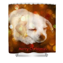 Shower Curtain featuring the photograph Christmas Puppy by Amanda Eberly-Kudamik