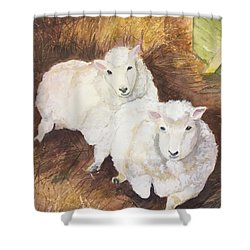 Shower Curtain featuring the painting Christmas Sheep by Lucia Grilletto