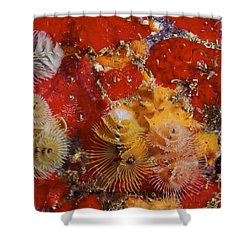 Christmas Tree Worms, Bonaire Shower Curtain by Terry Moore
