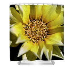 Shower Curtain featuring the photograph Chrysanthos by Linda Lees