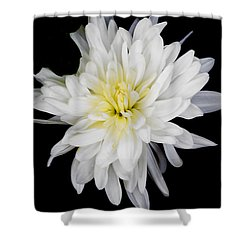 Chrysanthemum Bloom Shower Curtain